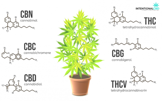 What-Are-Cannabinoids-A-2020-Guide-IntentionalCBD.com